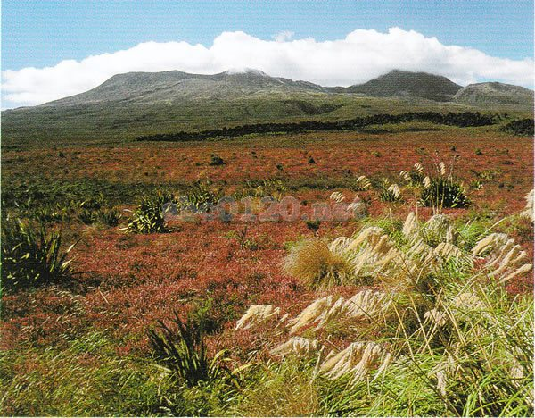 トンガリロ国立公園の画像 p1_11