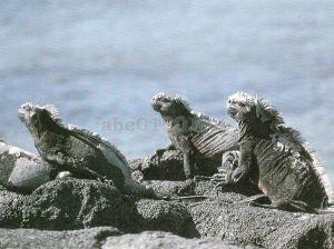 ガラパゴス諸島の画像 p1_34