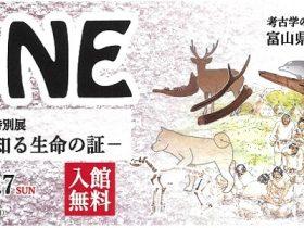 「BONE<骨>—貝塚で知る生命の証—」富山県埋蔵文化財センター
