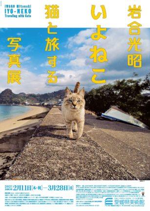 「岩合光昭 いよねこ 猫と旅する写真展」愛媛県美術館