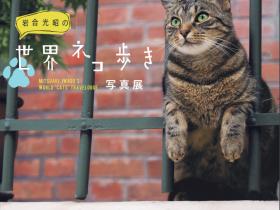 写真展「岩合光昭の世界ネコ歩き」東京富士美術館