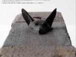 コレクション展「若林 奮 新収蔵作品」神奈川県立近代美術館 葉山