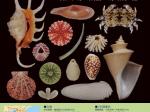 「ウミカラ -海の生きものの殻の話-」千葉県立中央博物館分館 海の博物館