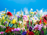 特別展「蜷川実花展─虚構と現実の間に─」山梨県立美術館