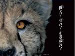 夏の特別展「THE モンスター展II-攻撃と防御」北九州市立自然史・歴史博物館-いのちのたび博物館