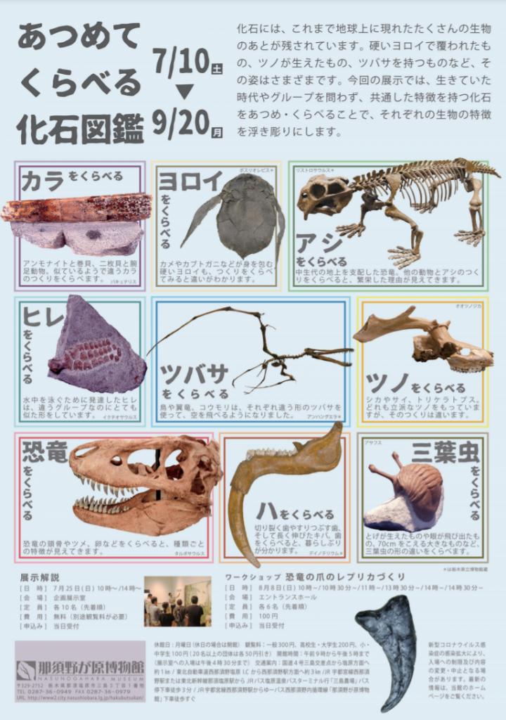 企画展「あつめて くらべる 化石図鑑」那須野が原博物館