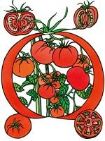 久保修《トマト》2016年 アトリエ蔵