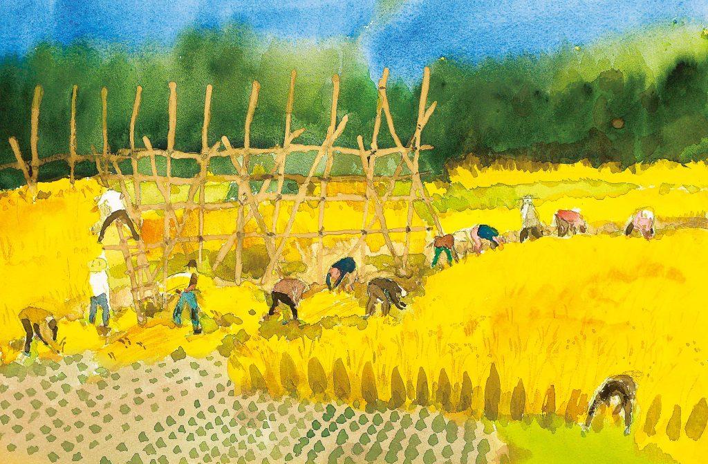 京丹後の稲刈り