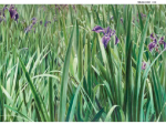 「川村悦子展 絵画の森へ」中信美術館
