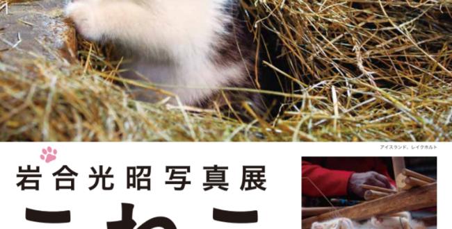 「岩合光昭写真展ーこねこ」尾道市立美術館