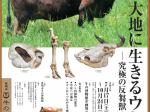 第29回企画展「大地に生きるウシ ―究極の反芻獣―」牛の博物館