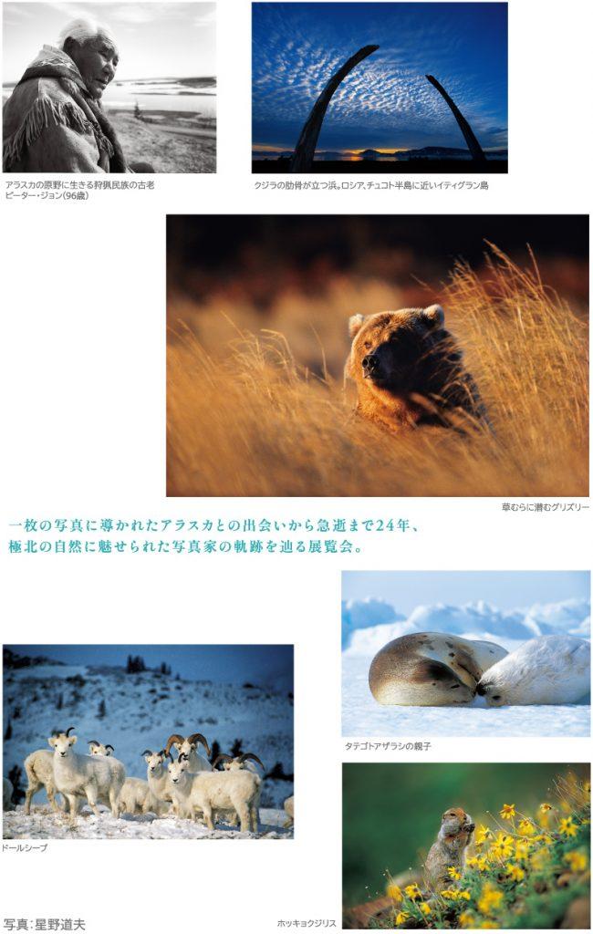 「星野道夫 悠久の時を旅する」岡山県立美術館
