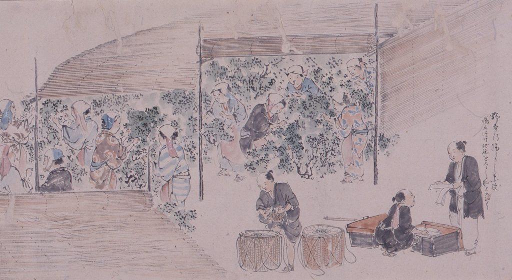 古代製茶之図(部分) 明治5年 宇治・上林記念館蔵