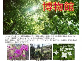 ロビー展「森に親しむ博物館」愛媛県総合科学博物館