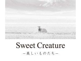 「糸山 英二 写真展:Sweet Creature ー美しいものたちー」キヤノンギャラリー大阪