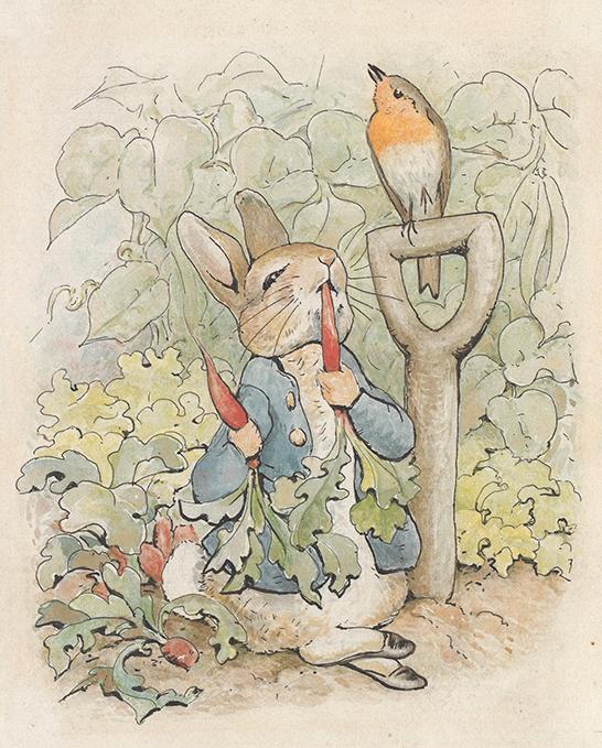 《『ピーターラビットのおはなし』挿絵用の原画》1902年 フレデリック・ウォーン社