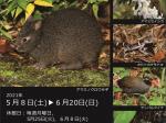 平城達哉写真展「奄美・沖縄の希少な生き物」鹿児島県立博物館