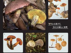 企画展「かながわ発 きのこの新種展」神奈川県立生命の星・地球博物館