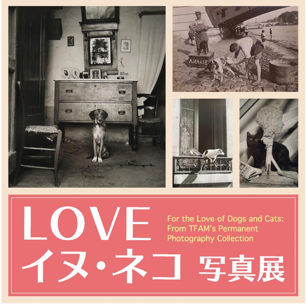 「LOVE イヌ・ネコ 写真展」東京富士美術館