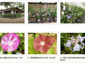 特別企画 くらしの植物苑「伝統の朝顔」国立歴史民俗博物館