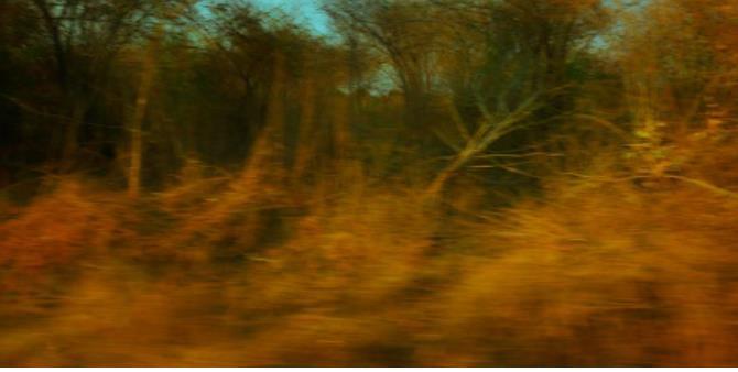 ローズマリー・ラング《effort and rush #1》2015 年 ©Rosemary Laing, courtesy of Tolarno Galleries