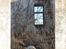 「KOSOVO 紛争のあとで」ナガサキピースミュージアム