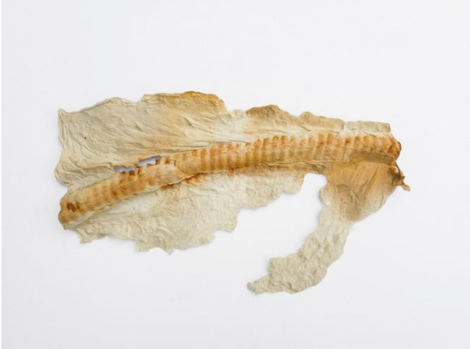 ファイバー・レリーフ上の酸化印 習作 #5     額外寸:横32.9×縦25.4×奥5.1 cm 手漉きの楮(こうぞ)繊維、鉄錆を染色